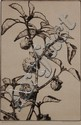 BERTHA JACQUES (1863-1941) PENCIL SIGNED ETCHING 'JIMSON WEED'