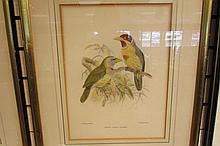 Signed J.G. Keulemans Bird Finch Lithograph