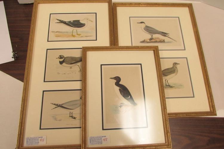 REV F O MORRIS 3 ETCHINGS SHORE BIRDS AQUATINT