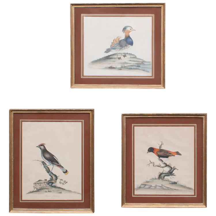 Set of Three Hand-Colored Engravings of Birds by William Hayes