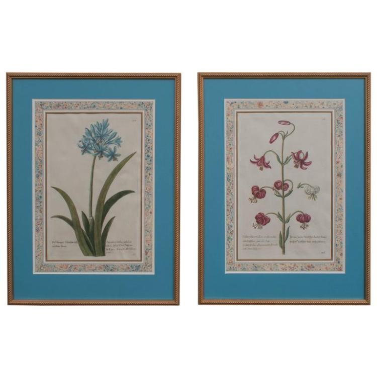 Pair of Botanical Engravings, Blue Matting