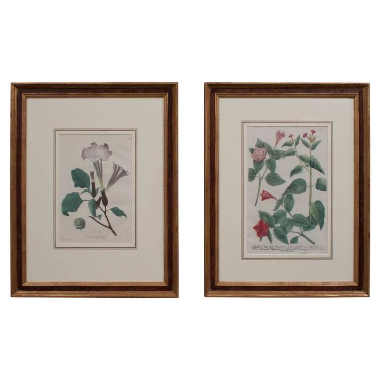 Assembled Pair of Hand Colored Botanical Engravings