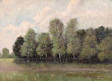 Trees by a Lake