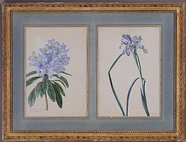 FRANZ X. GRUBER (AUSTRIAN, 1801-1862): RHODODENDRON PONTICUM AND IRIS ACUTA
