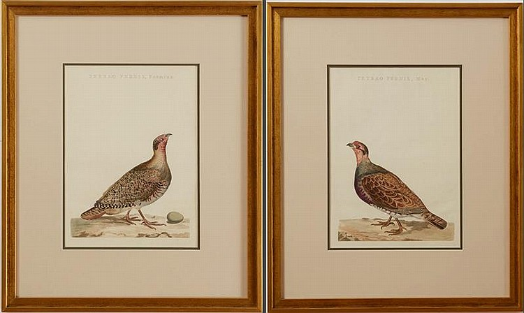 CORNELIUS NOZEMAN (1721-1786): TETRAO PREDIX, FOEMINA; AND TETRAO PERDIX, MAS, FROM NEDERLANDSCHE VOGELEN