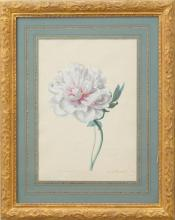 FRANZ XAVER GRUBER (1801-1862): PAEONIA ARBORIA