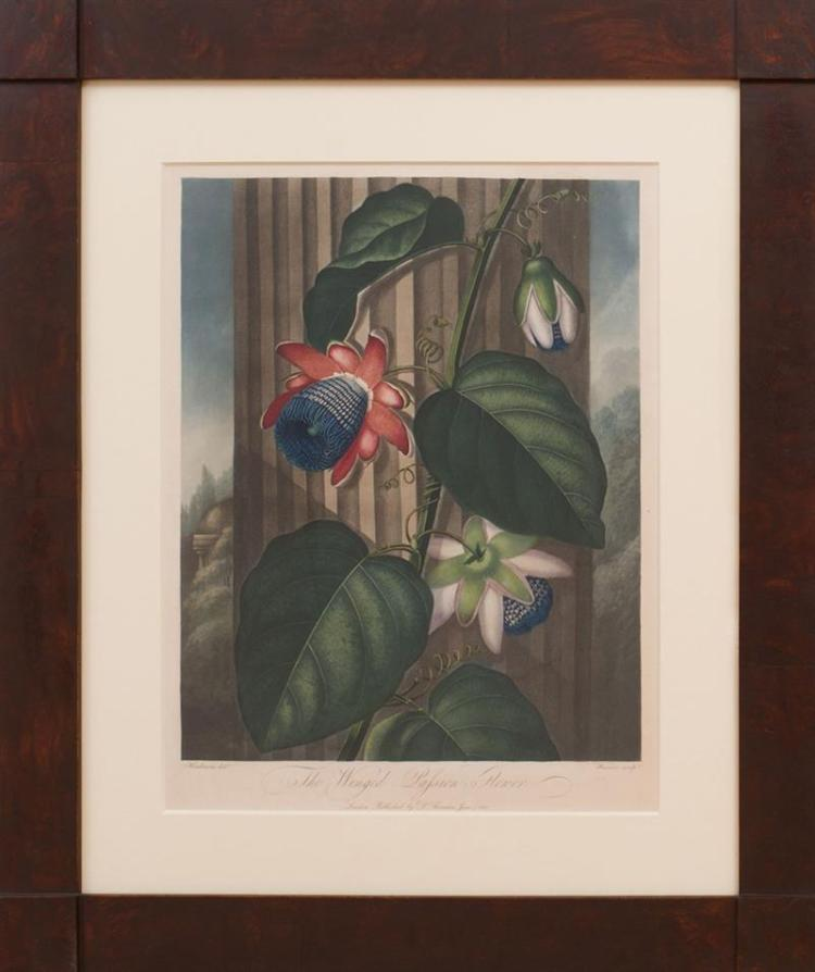 ROBERT JOHN THORNTON (1768-1837): THE WINGED PASSION FLOWER, FROM THE TEMPLE OF FLORA