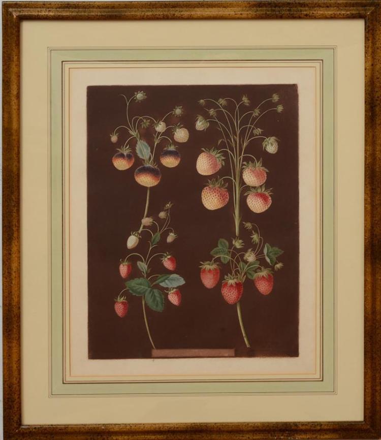 GEORGE BROOKSHAW (1751-1823): POMONA BRITTANICA: TWELVE PLATES