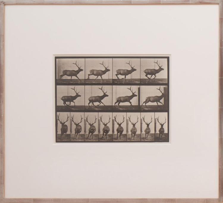 EADWEARD MUYBRIDGE (1830-1904): ANIMAL LOCOMOTION, PLATE 633; AND ANIMAL LOCOMOTION PLATE 675