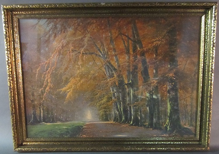 Framed Print of the Forest