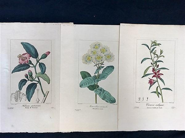Botanical Prints x 3