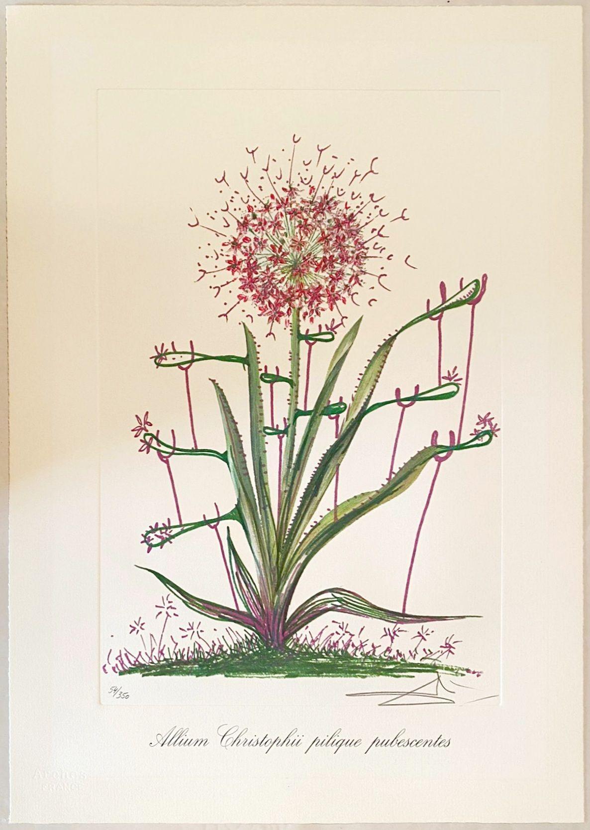 Salvador Dalí - Allium Christophi pilique pubescentes, 1972