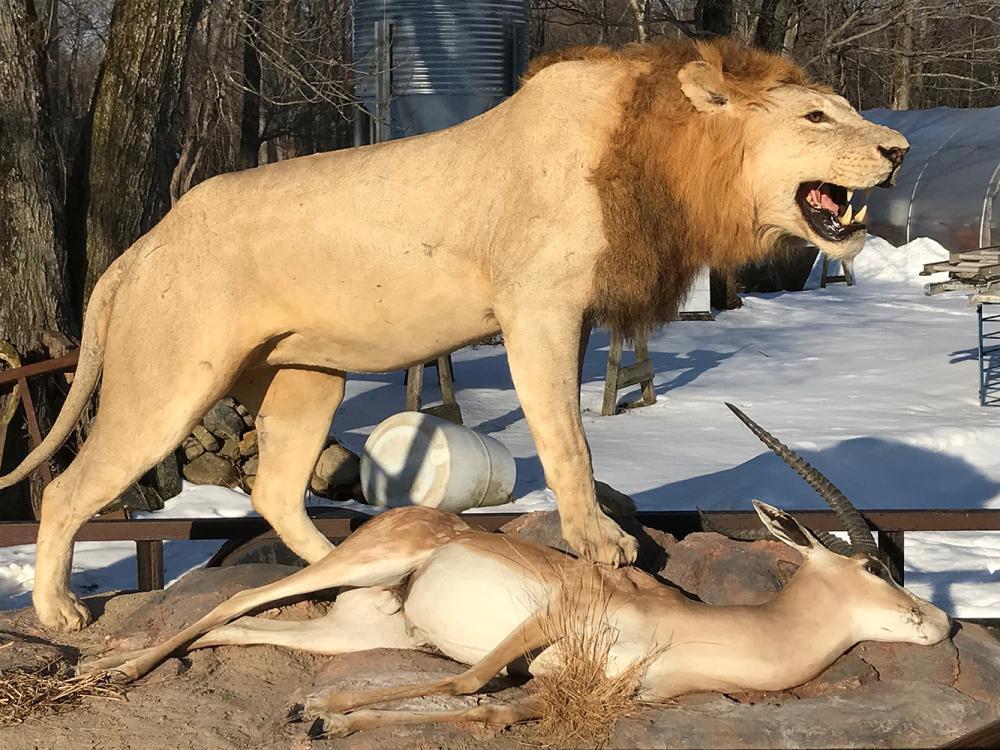 Full Lion Mount