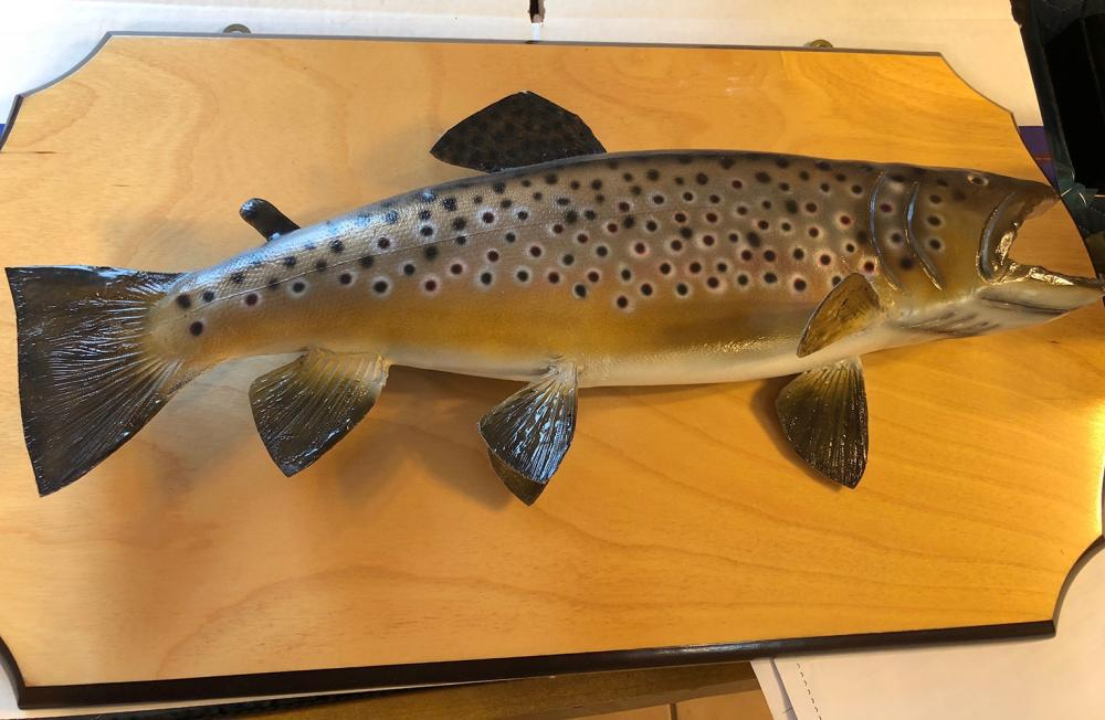 Brown Trout Taxidermy Mount