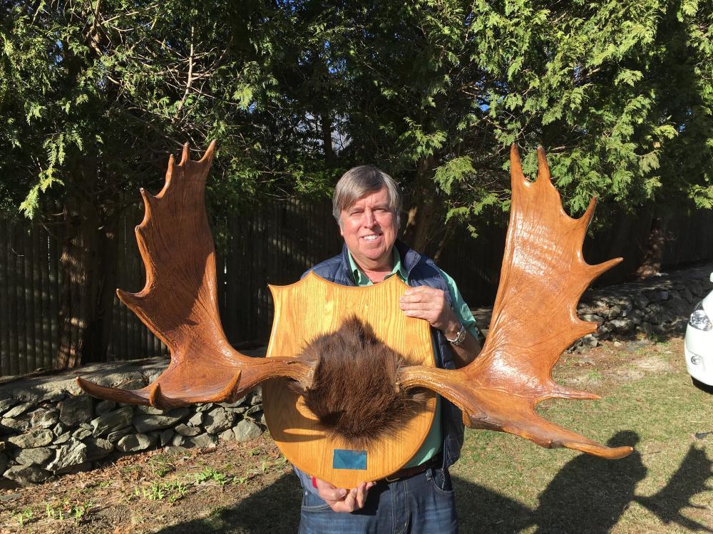 Lot 102: Moose Antlers