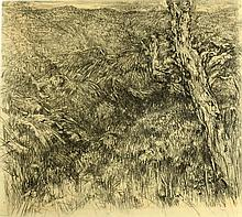 Anna Ticho 1894 - 1980, Landscape, Charcoal on