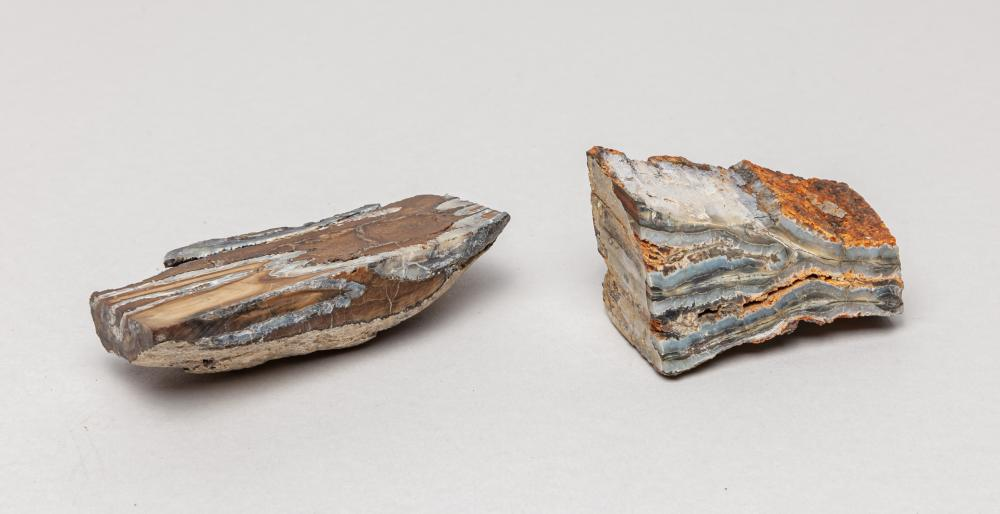 Rare Wooly Mammoth Teeth Fossil
