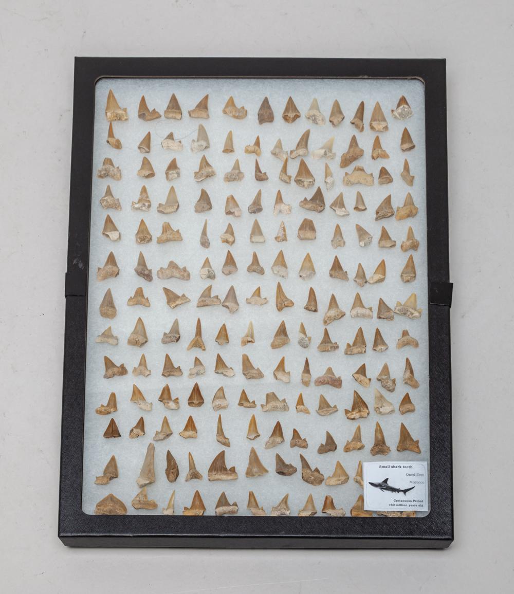 Rare Shark Tooth Sets