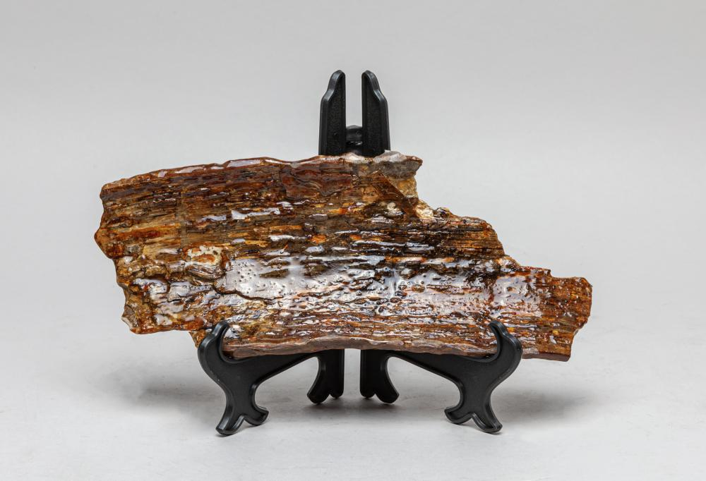 Collectible Fossilized Wooly Mamm Bark T Sculpture