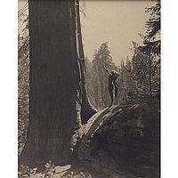 "Lindley Eddy ""Prayer To Tree God,"" 1925, photograph, Jo Ann Callis (American, b. 1940) ""After Blossfeldt,"""