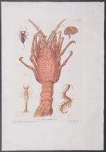Knorr - Lobster, Crustaceans. F6