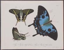 Jablonsky - Butterflies or Moths. 50
