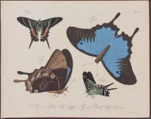 Jablonsky - Butterflies or Moths. 51