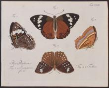 Jablonsky - Butterflies or Moths. 221