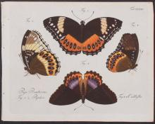 Jablonsky - Butterflies or Moths. 219