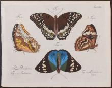 Jablonsky - Butterflies or Moths. 220