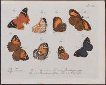 Jablonsky - Butterflies or Moths. 222
