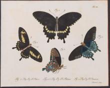 Jablonsky - Butterflies or Moths. 19