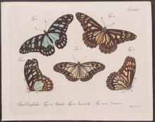 Jablonsky - Butterflies or Moths. 124