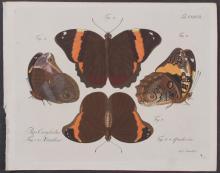 Jablonsky - Butterflies or Moths. 127
