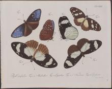 Jablonsky - Butterflies or Moths. 122