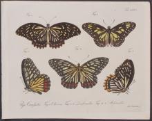 Jablonsky - Butterflies or Moths. 126