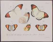 Jablonsky - Butterflies or Moths. 96