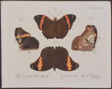 Jablonsky - Butterflies or Moths. 128