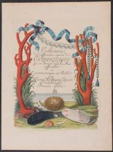 Knorr - Frontispiece with Coral & Clam Shells