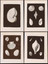 Knorr - 10 Shell Engravings