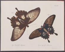 Jablonsky - Butterflies or Moths. 16