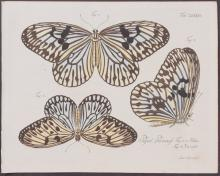 Jablonsky - Butterflies or Moths. 86