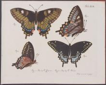 Jablonsky - Butterflies or Moths. 17