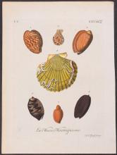 Knorr - Shells. 5-28