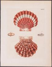 Knorr - Clam Shells. 1-14