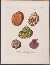 Knorr - Snail & Clam Shells. 5-12