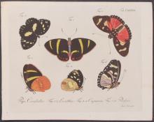 Jablonsky - Butterflies or Moths. 137