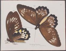 Jablonsky - Butterflies or Moths. 5