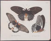 Jablonsky - Butterflies or Moths. 8