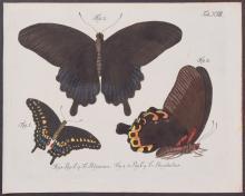 Jablonsky - Butterflies or Moths. 18